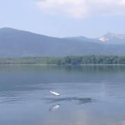 屈斜路湖アメマスのライズ