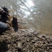 釧路湿原(国立公園外)アメマス釣り