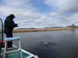 釧路湿原カヌー 春のアメマス釣り