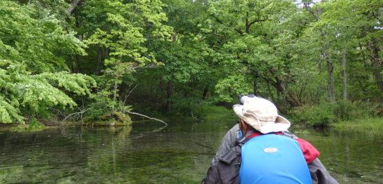 釧路川の源流をカヌーで